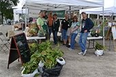 Stop in to have the Master Gardeners answer all of your gardening questions.