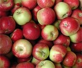 Apples at the Farmers Market