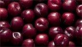 Fresh plums image.