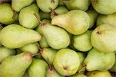 A bunch of fresh pears photo.