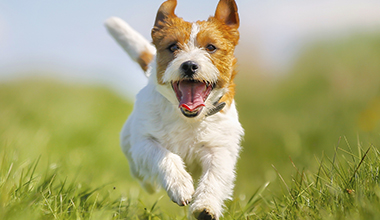 Image of dog running